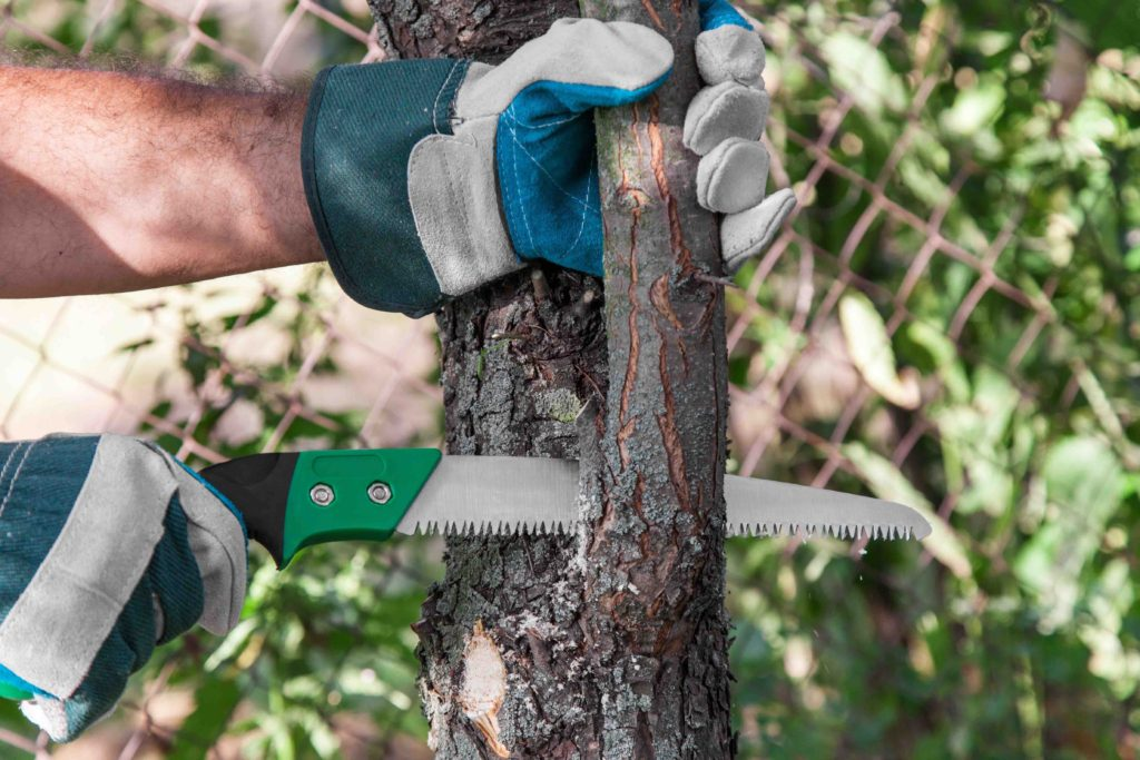 local tree pruning fort worth, local tree pruning in Fort Worth
