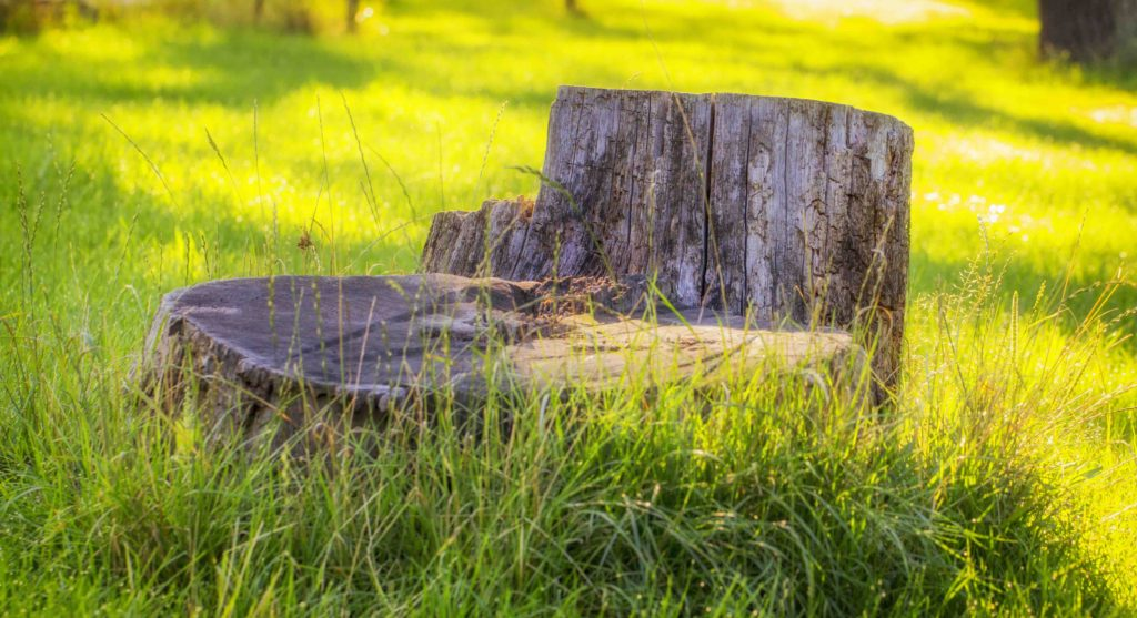 local tree stump removal, local tree stump removal fort worth