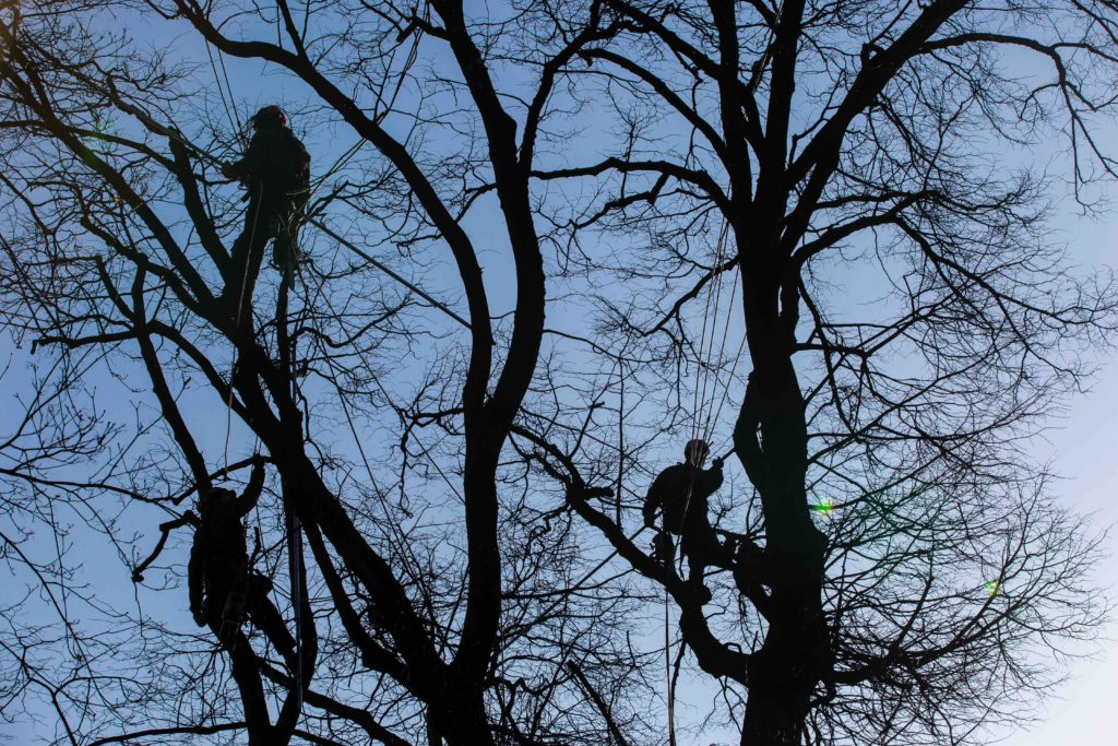 affordable tree pruning, affordable tree pruning services