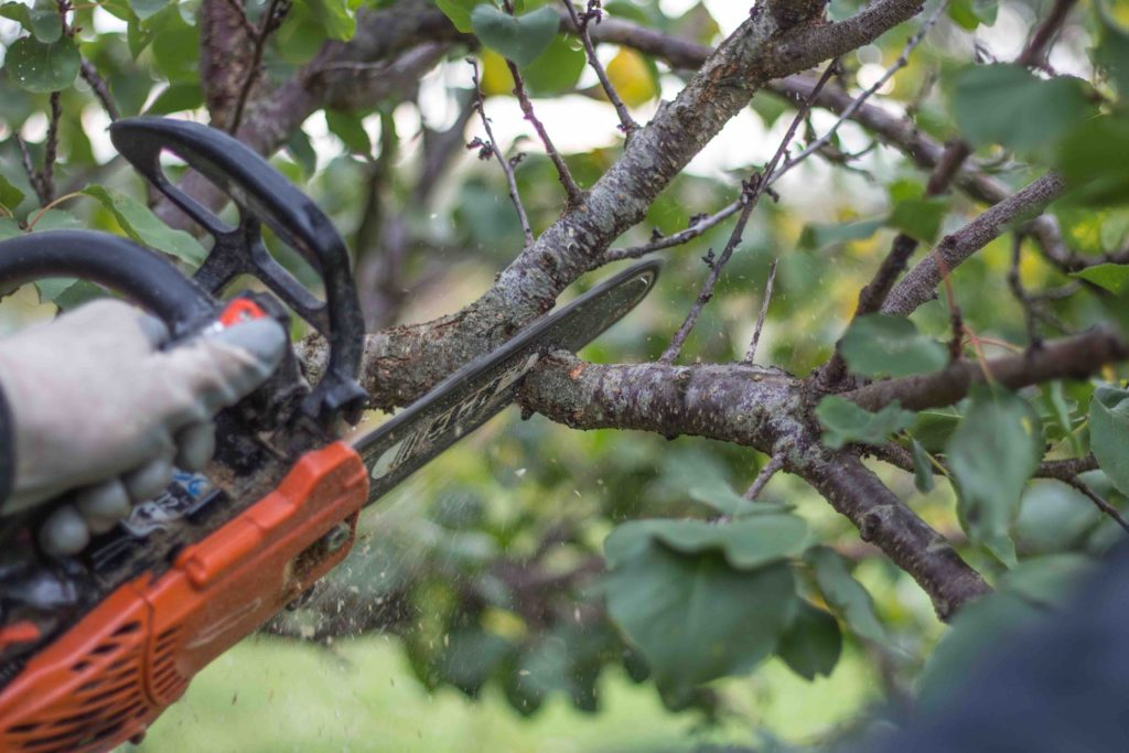 tree limb pruning, tree limb pruning services