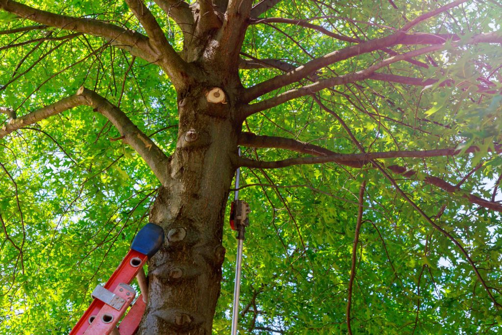 texas professional tree service