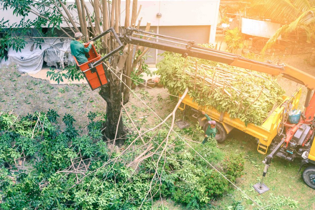 Best local tree pruning service, local tree pruning services