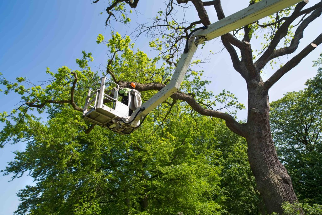 professional tree services fort worth