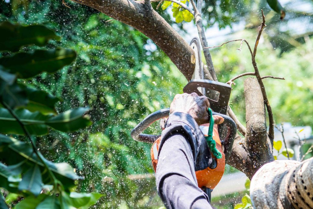 dallas tree trimming contractor