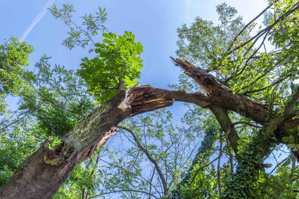 fallen tree removal, diy fallen tree removal tips