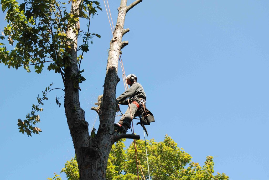 fort worth tree services