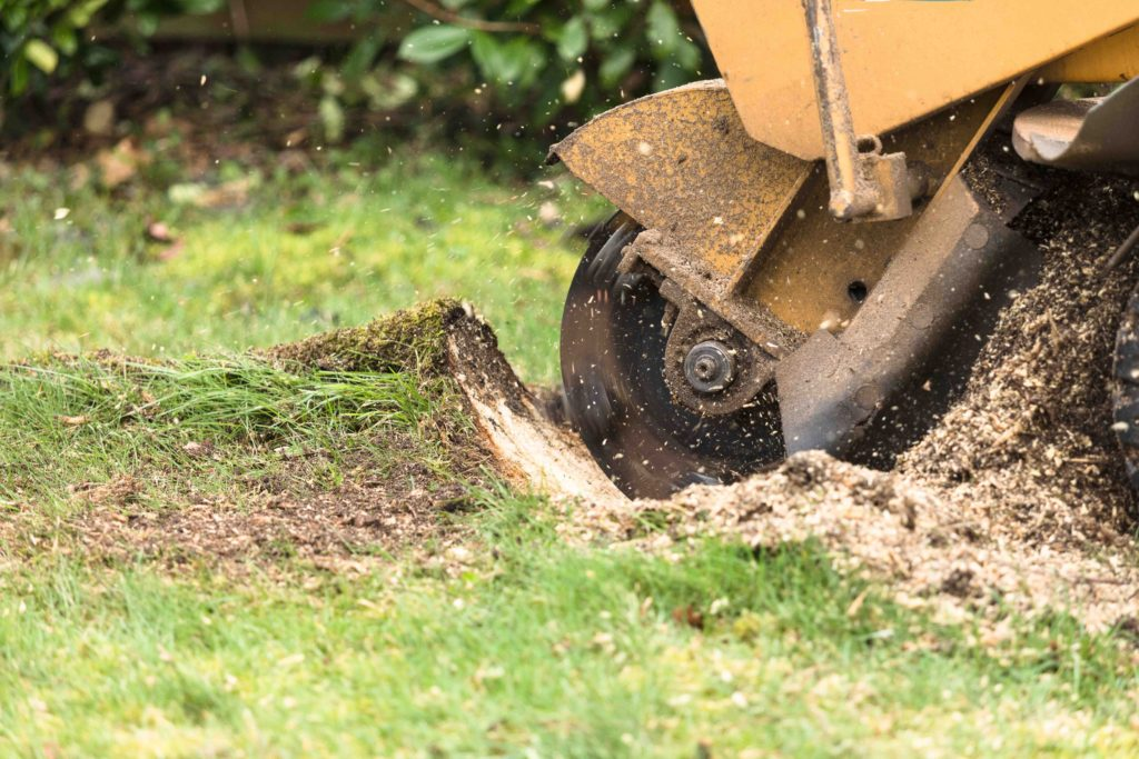 professional tree stump removal