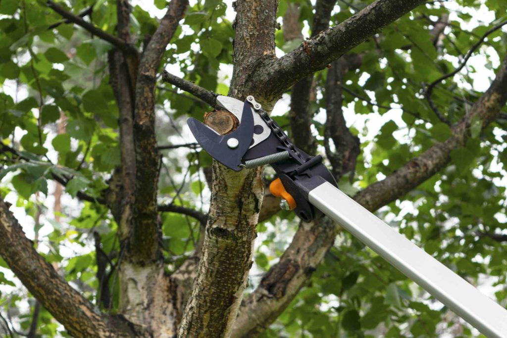 dallas tree pruning experts