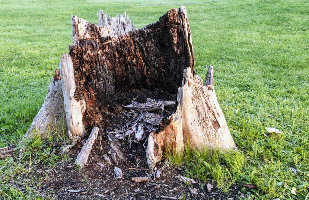 tree stump services