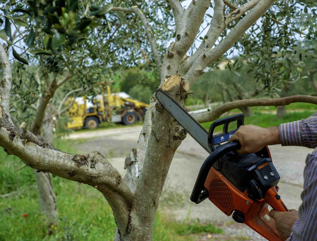 best tree trimming services fort worth, best tree trimming services