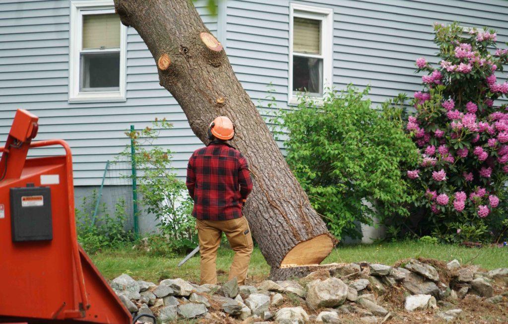 dallas professional tree removal