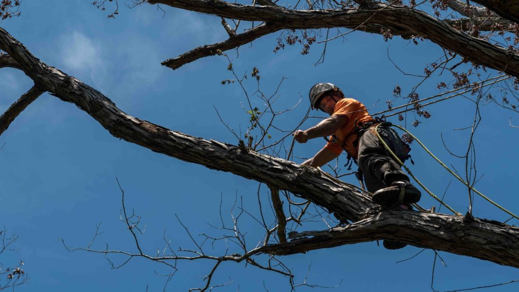 professional tree removal, professional tree removal Fort Worth