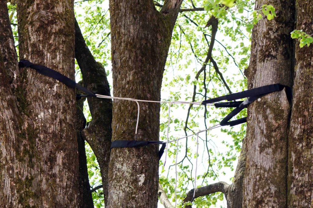 tree bracing, tree bracing and cabling differences