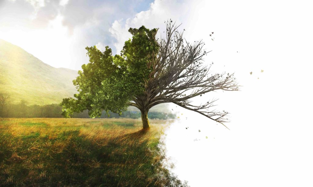 are your trees healthy, expert advise