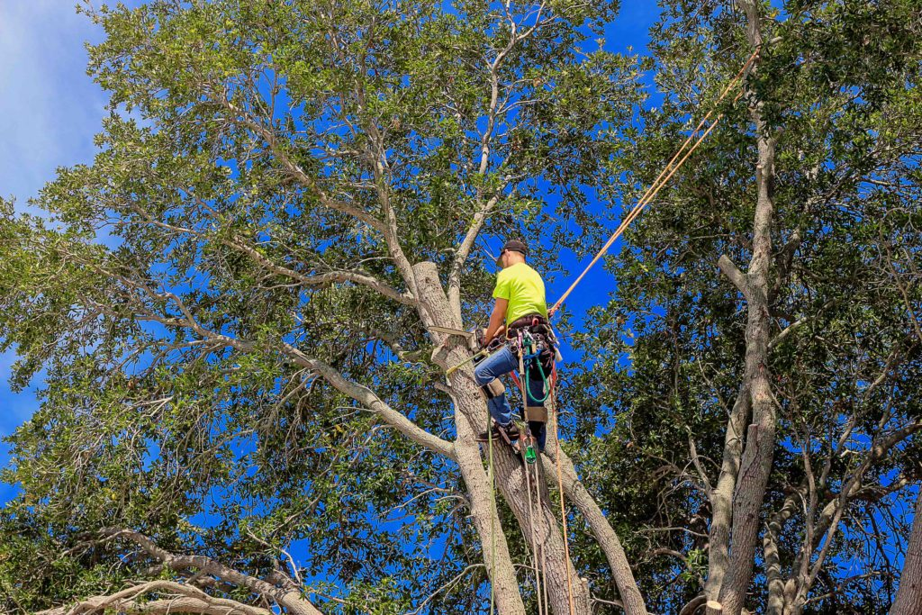 types of tree trimming, tree trimming types
