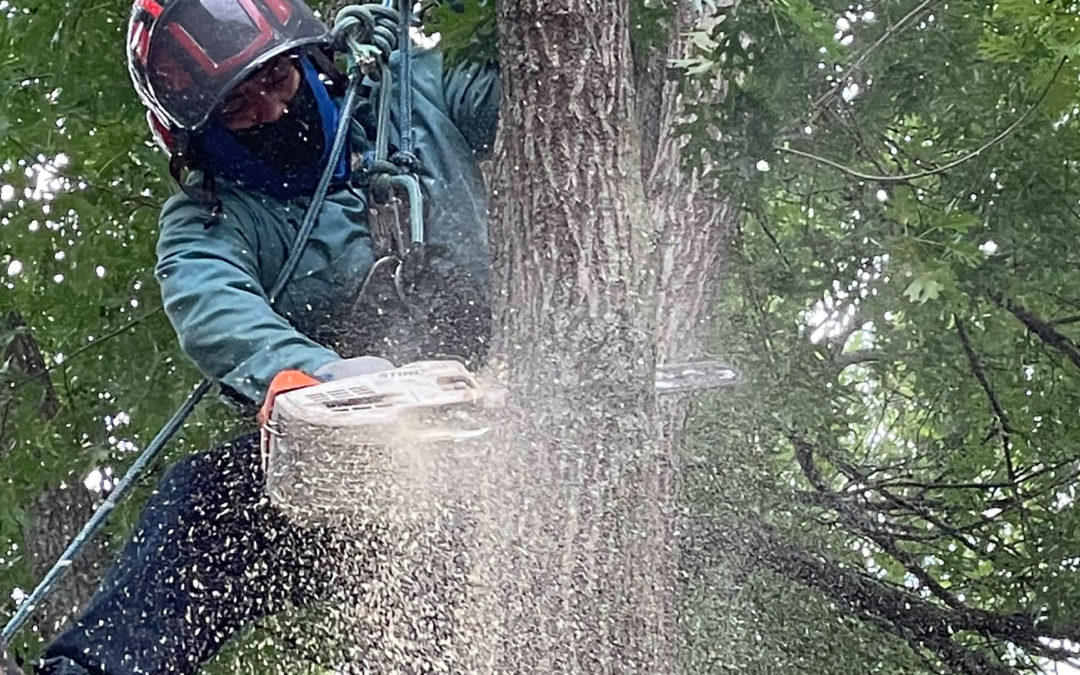 Types of Tree Trimming